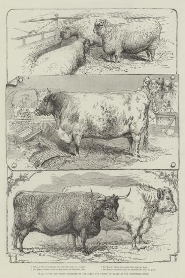 Prize Cattle and Sheep Exhibited by the Queen and Prince of Wales at the Smithfield Show--Giclee Print