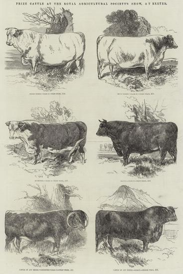 Prize Cattle at the Royal Agricultural Society's Show, at Exeter-Harrison William Weir-Giclee Print