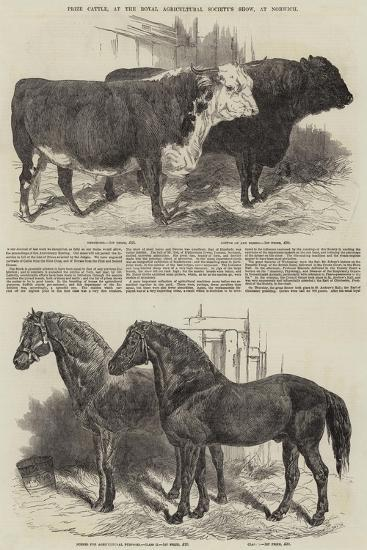 Prize Cattle, at the Royal Agricultural Society's Show, at Norwich-Harrison William Weir-Giclee Print