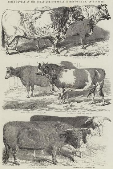 Prize Cattle at the Royal Agricultural Society's Show, at Windsor-Harrison William Weir-Giclee Print