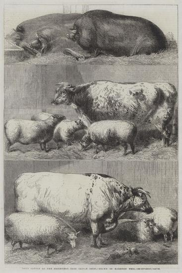 Prize Cattle at the Smithfield Club Cattle Show-Harrison William Weir-Giclee Print