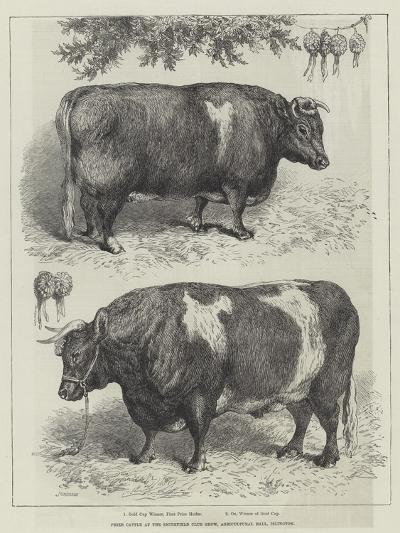 Prize Cattle at the Smithfield Club Show, Agricultural Hall, Islington--Giclee Print