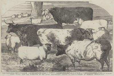 Prize Cattle, from the Exhibition of the Royal Agricultural Society, at Lincoln-Harrison William Weir-Giclee Print