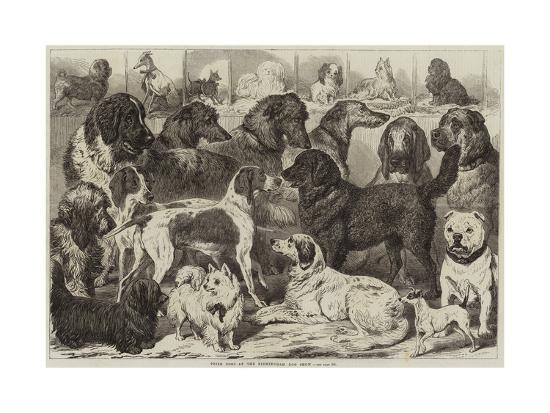 Prize Dogs at the Birmingham Dog Show--Giclee Print