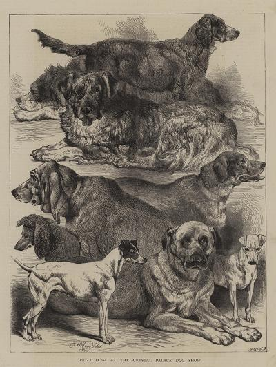 Prize Dogs at the Crystal Palace Dog Show-Harrison William Weir-Giclee Print