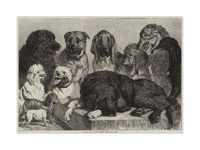 Prize Dogs at the Crystal Palace Dog Show-Samuel John Carter-Giclee Print