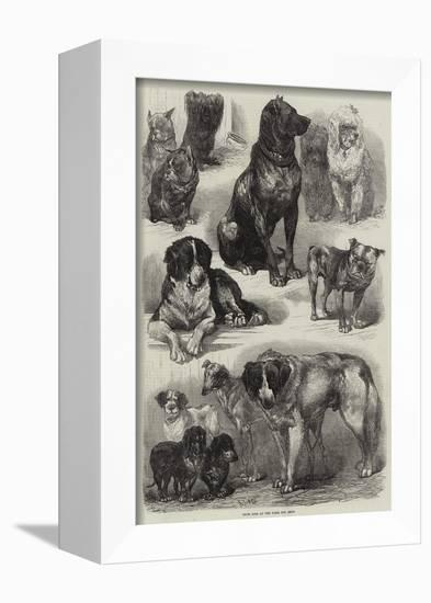 Prize Dogs at the Paris Dog Show-Auguste Andre Lancon-Framed Stretched Canvas Print