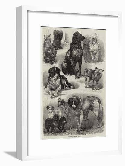 Prize Dogs at the Paris Dog Show-Auguste Andre Lancon-Framed Premium Giclee Print