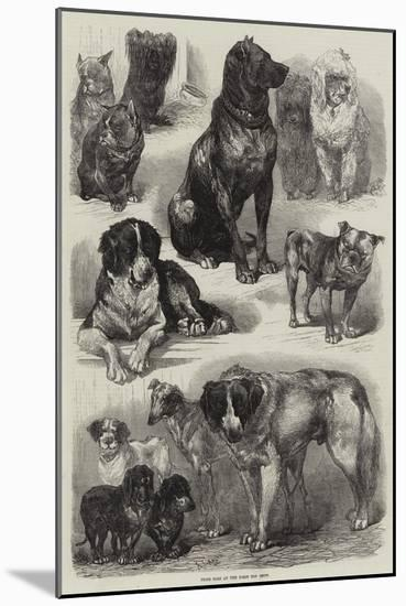 Prize Dogs at the Paris Dog Show-Auguste Andre Lancon-Mounted Premium Giclee Print