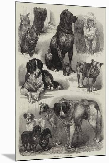 Prize Dogs at the Paris Dog Show-Auguste Andre Lancon-Mounted Giclee Print