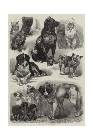 https://imgc.artprintimages.com/img/print/prize-dogs-at-the-paris-dog-show_u-l-puh56e0.jpg?p=0