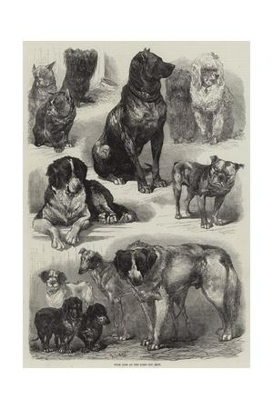 https://imgc.artprintimages.com/img/print/prize-dogs-at-the-paris-dog-show_u-l-puh56g0.jpg?p=0