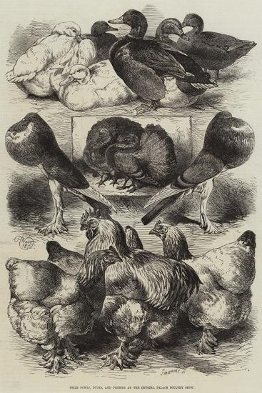 Prize Fowls, Ducks, and Pigeons at the Crystal Palace Poultry Show-Harrison William Weir-Giclee Print