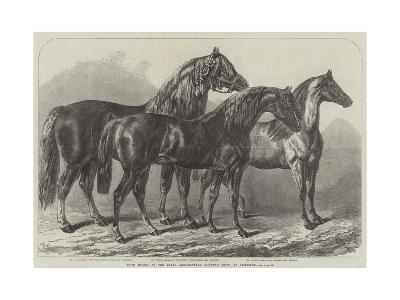 Prize Horses at the Royal Agricultural Society's Show, at Leicester-Samuel John Carter-Giclee Print