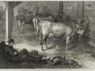Prize Jersey Cows at the Bath and West of England Agricultural Show at Southampton-George Bouverie Goddard-Giclee Print