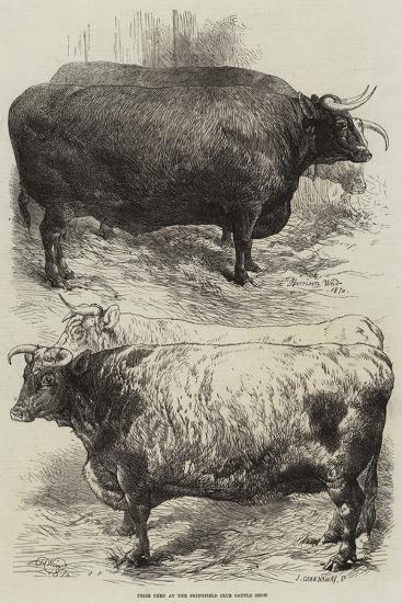 Prize Oxen at the Smithfield Club Cattle Show-Harrison William Weir-Giclee Print