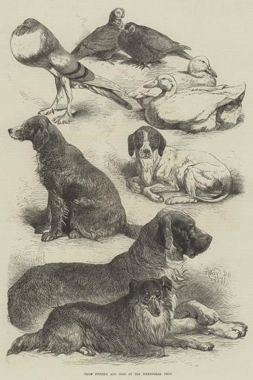 Prize Poultry and Dogs at the Birmingham Show-Harrison William Weir-Giclee Print