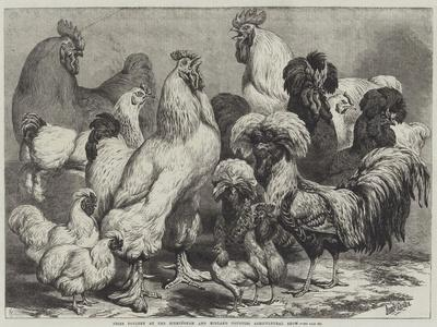 Prize Poultry at the Birmingham and Midland Counties Agricultural Show-Samuel John Carter-Giclee Print