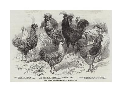 Prize Poultry, from the Winter Show, at St George'S-Road--Giclee Print