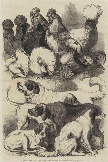 Prize Poultry, Pigeons, and Dogs at the Birmingham Show-Harrison William Weir-Giclee Print