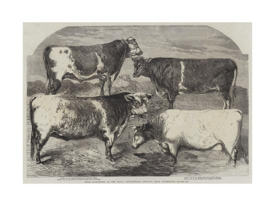 Prize Shorthorns at the Royal Agricultural Society's Show, Canterbury-Harrison William Weir-Giclee Print