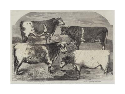 https://imgc.artprintimages.com/img/print/prize-shorthorns-at-the-royal-agricultural-society-s-show-canterbury_u-l-pumdkt0.jpg?p=0