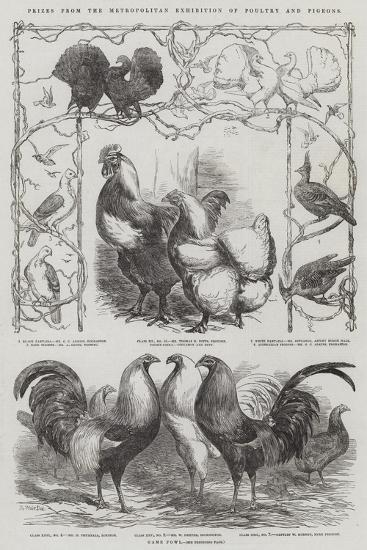 Prizes from the Metropolitan Exhibition of Poultry and Pigeons-Harrison William Weir-Giclee Print