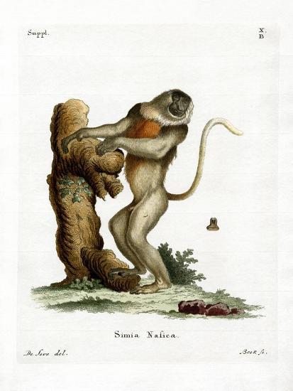 Proboscis Monkey--Giclee Print