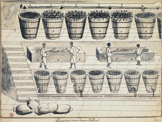 Processing Cycle for Extracting Sugar from Beet, Watercolor, Portugal, 19th Century--Giclee Print