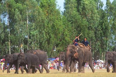 Procession, Elephant Round-Up, Surin, Thailand--Photographic Print
