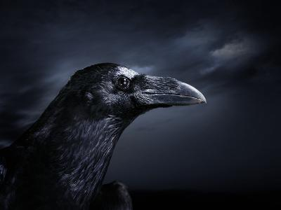 Profile of a Crow-Digital Zoo-Photographic Print
