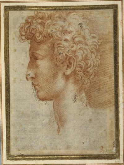 Profile of a Young Man-Parmigianino-Giclee Print