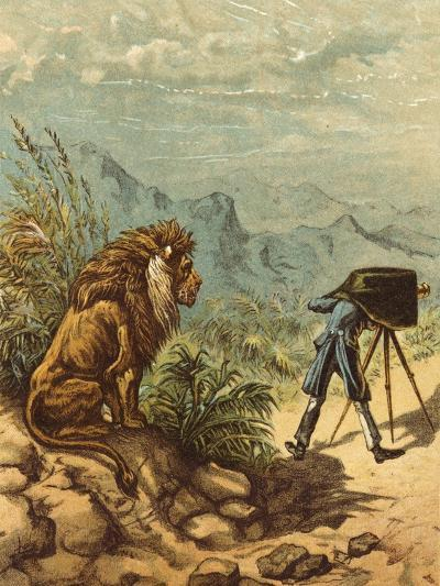 Promising Outlook, Lion Observes Photographer-Ernest Henry Griset-Photographic Print