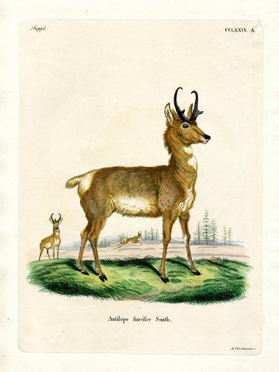 Pronghorn Antelope--Giclee Print