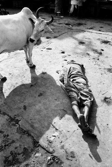Prostrate Man Praying and Cow, Jagannath Temple, Puri, Orissa, India, 1977--Photographic Print