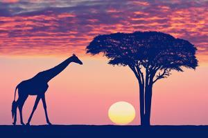 Silhouettes of Giraffe and Acacia Tree against the Beautiful Sunset Sky in the Serengeti Park. Tanz by Protasov AN