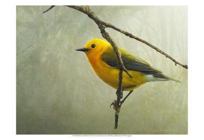 Prothonotary Warbler-Chris Vest-Art Print