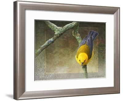 Prothonotary-Chris Vest-Framed Art Print