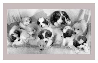 Proud Mom Showing Off Her Pups--Art Print