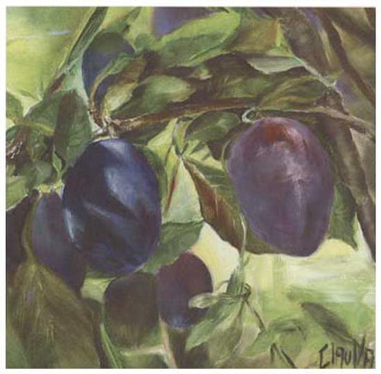 Prunes-Clauva-Art Print