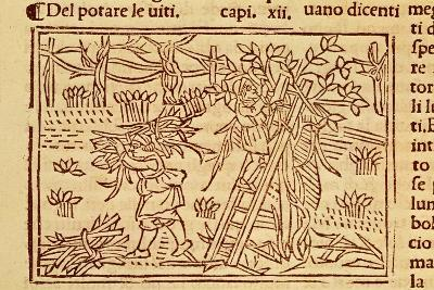 Pruning Fruit Trees from De Agricoltura Vulgare--Giclee Print
