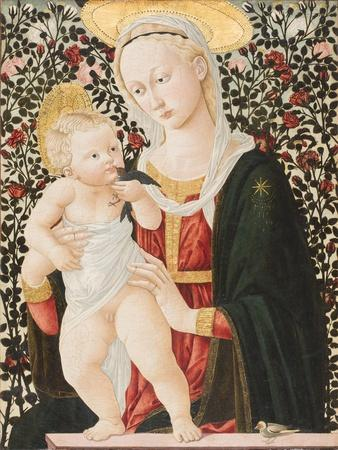 Madonna of the Roses, C.1485-90
