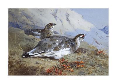 Ptarmigan in Summer Foliage-Archibald Thorburn-Premium Giclee Print