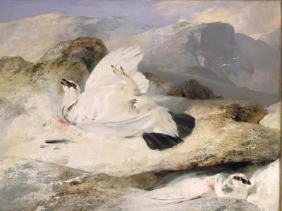 Ptarmigan-Edwin Henry Landseer-Giclee Print