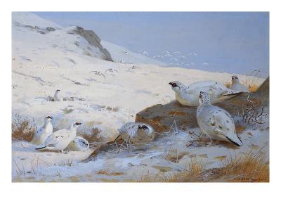 Ptarmigan-Archibald Thorburn-Giclee Print