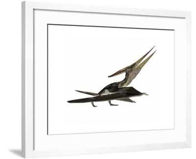 Pteranodon Flying Reptile-Stocktrek Images-Framed Art Print