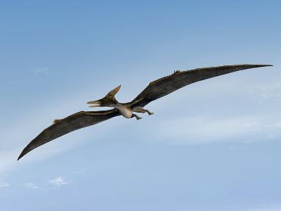 Pteranodon Pterosaur, Artwork-Friedrich Saurer-Photographic Print