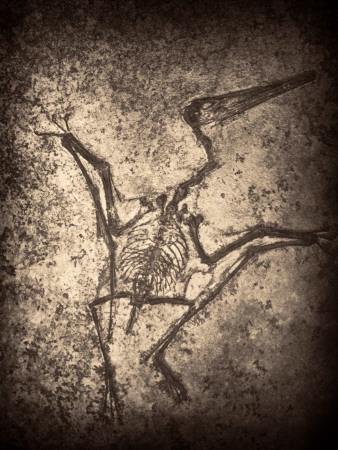 https://imgc.artprintimages.com/img/print/pterodactylus-kochi_u-l-pyyx830.jpg?p=0