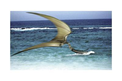 Pterodaustro Skimming the Water for Crustaceans-Stocktrek Images-Art Print