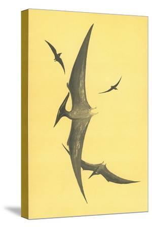 Pterodons